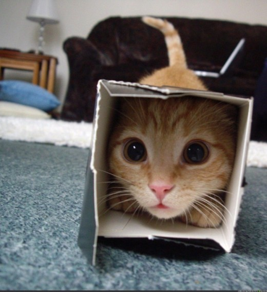 20-of-the-funniest-pictures-of-cats-in-boxes