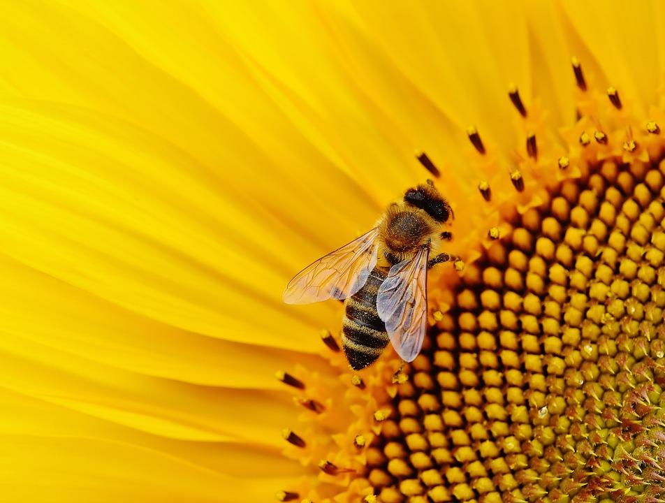 Insetti come bioindicatori ecologici