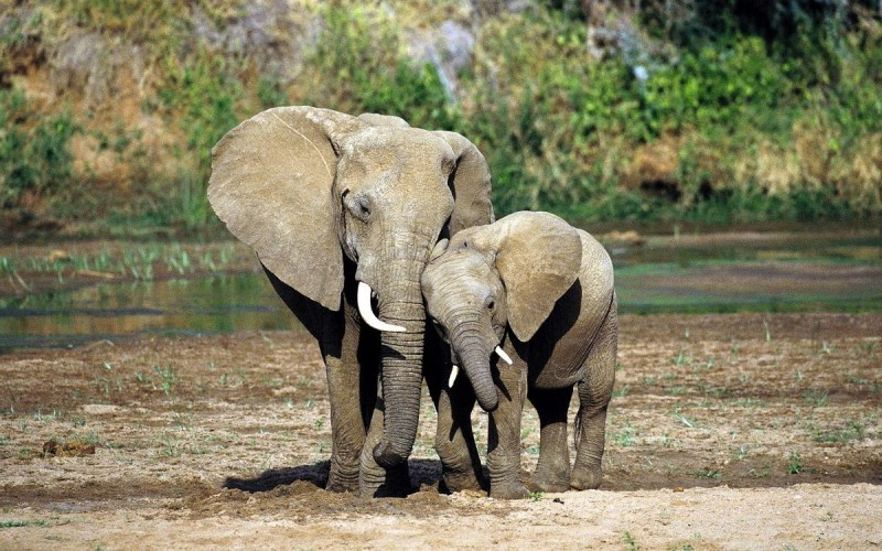 Mattanza elefanti