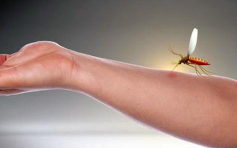 Punture-delle-zanzare-rimedi-naturali-e1469548224811