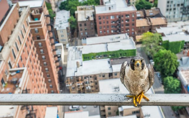 Photograph: Luke Massey, Young Environmental Photographer of the Year 2016