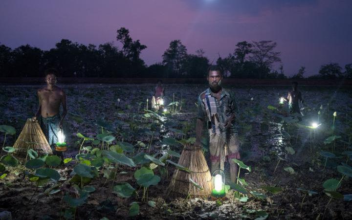 99130367_In_India's_state_of_Odisha_villagers_trap_fish_using_cone-shaped_baskets_and_solar_light-large_transgsaO8O78rhmZrDxTlQBjdGLvJF5WfpqnBZShRL_tOZw.jpg