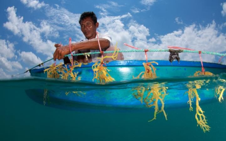99130388_Eric_Madeja_Seaweed_Farming_Malaysia_2015-large_transA7N2CxnJWnYI3tCbVBgu9V-UxAzQBOWbRM9zStsHOzU.jpg