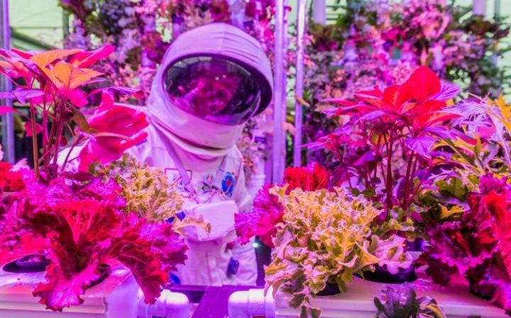 Bell_Guy_Hydroponics_at_RHS_Chelsea_Flower_Show_1-large_transZgEkZX3M936N5BQK4Va8Rf0QuvV9b2Cg7c0YjRks5eM.jpg