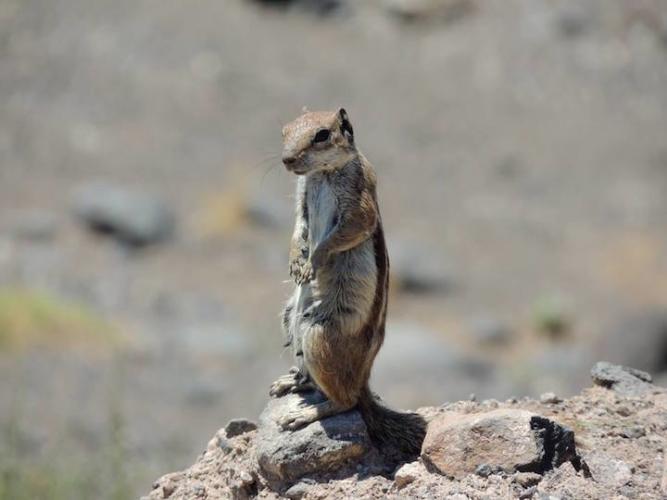 scoiattolo-africano-667x500.jpg