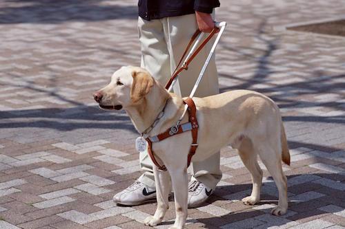 cane-guida-non-vedenti