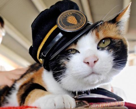 capostazione-gatto-tama-1024x773-2