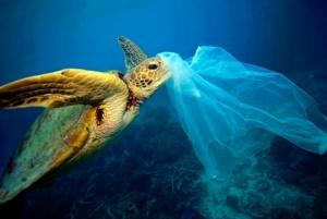 Plastica monouso nel mare