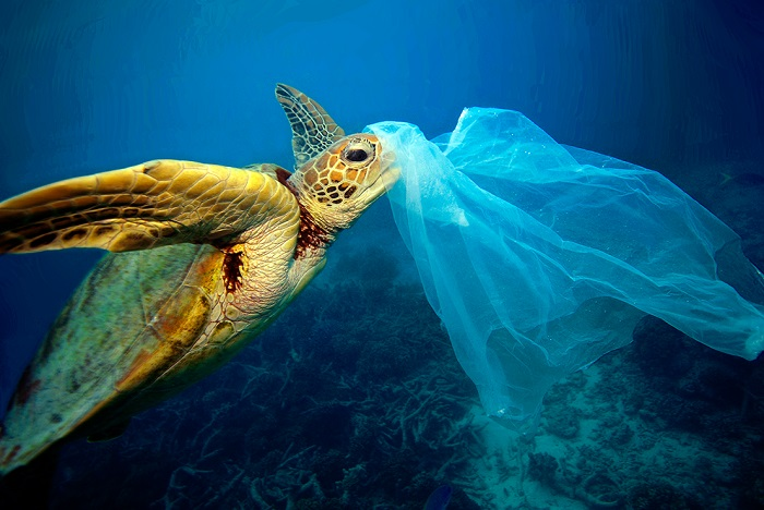 Le buste di plastica rappresentano un grave pericolo per le tartarughe marine