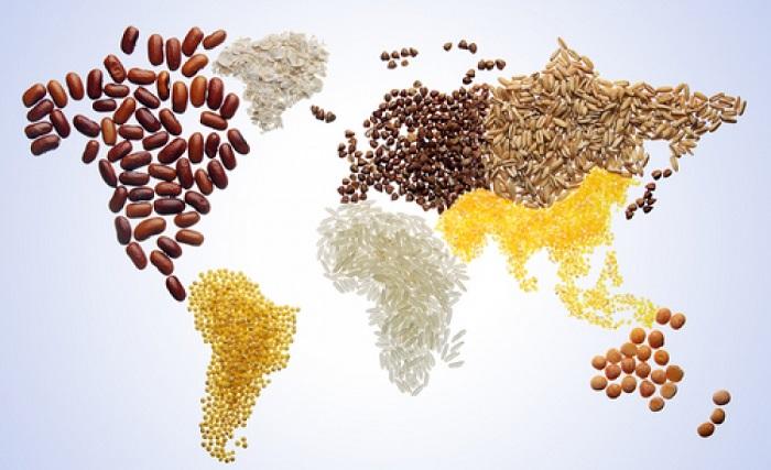 cibo mondo
