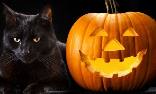 http://www.deabyday.tv/data/guides/cuccioli/consigli-in-pi-/Come-vincere-la-paura-del-gatto-nero-e-altri-animali-ad-Halloween/image_big_16_9/1-vincere-paura-gatti-neri-altri-animali-halloween.jpg