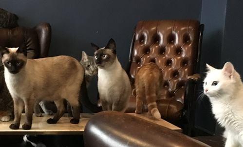 Cafè des chats a Parigi