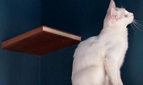 Un abitante del Romeow Cat Bistrot a Roma