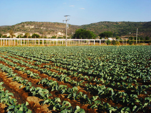 agricultura_michoacan