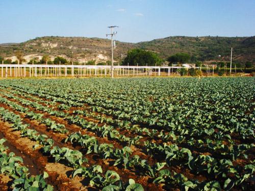 agricultura_michoacan