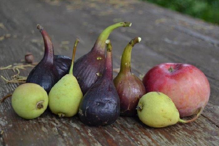 Alcune specie di frutta riscoperte nelle sue ricerche