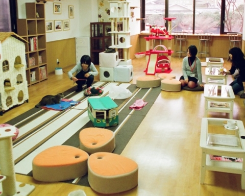 nekokaigi_a_cat_cafe_in_kyoto_-_march_16_2010