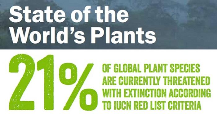Stato delle piante nel mondo: il 21% delle specie vegetali a livello globale è attualmente a rischio di estinzione in accordo con i criteri della IUCN Red List