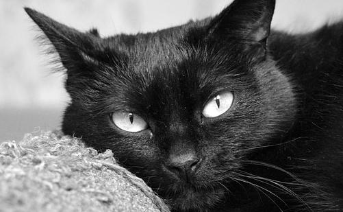 Enpa e altre associazioni animaliste valutano con attenzione richieste di adozione di gatti neri nel periodo di Halloween.