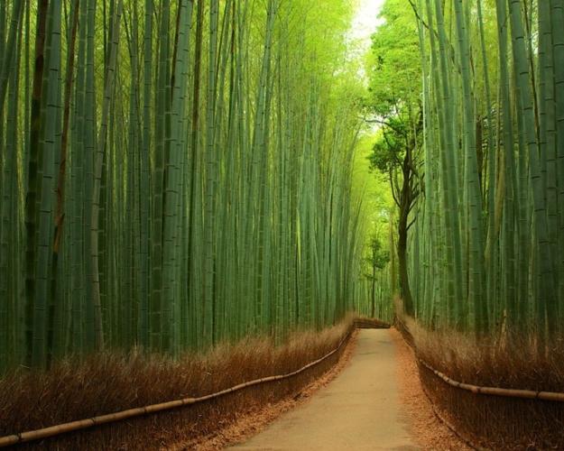 foresta-bambu-Giappone-Foto-per-gentile-concessione-di-Yuya-Horikawa-Tomoaki-Kabe.--625x500.jpg