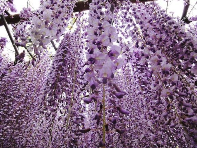 giardino-da-favola-in-giappone-667x500.jpeg