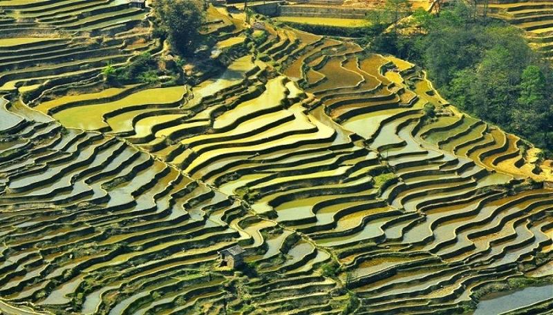 Terrazzamenti di riso di Honghe Hani, Cina foto meteofan.it