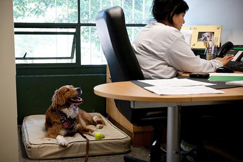 2-cane-ufficio