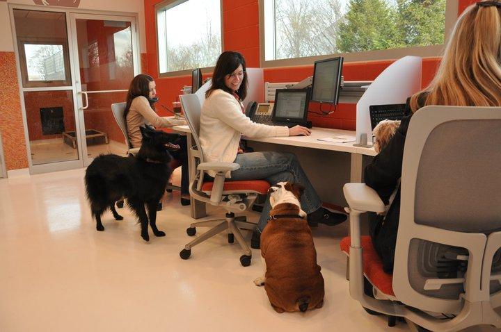 3-cani-a-lavoro