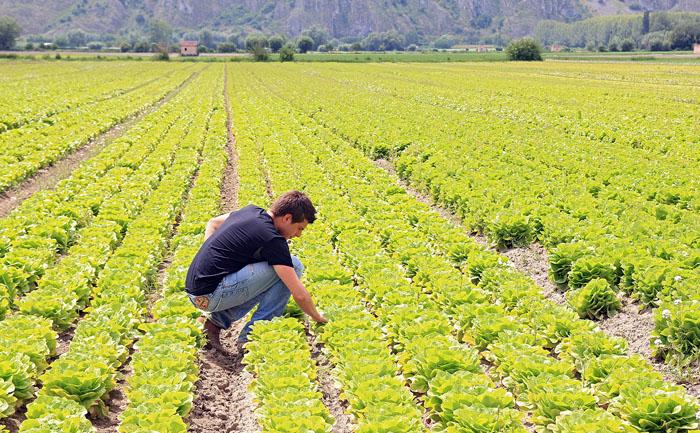 puglia- agricoltura