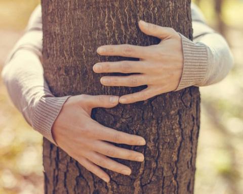 abbracciare-alberi-evidenza
