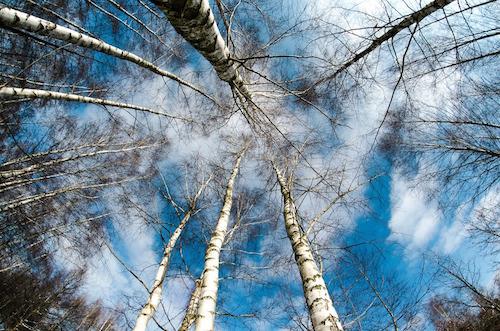 alberi-inverno