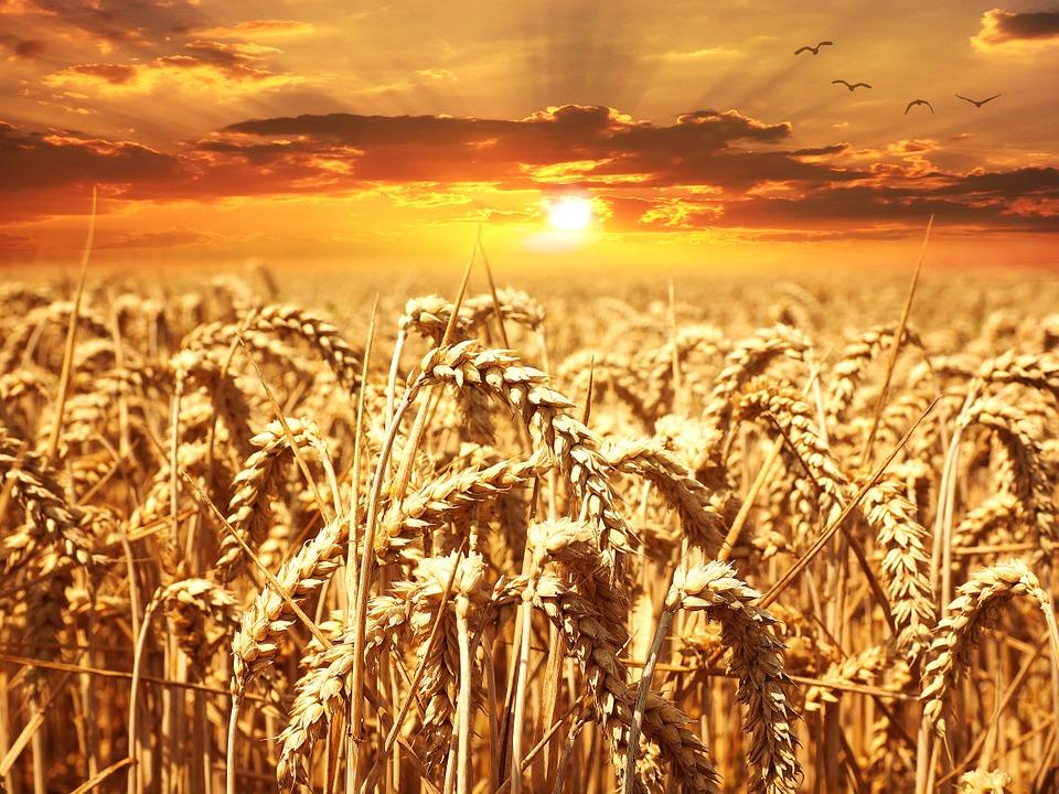 Erasmus agricolo