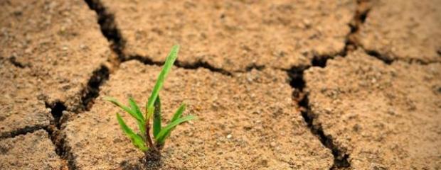risorsa_suolo-agricoltura