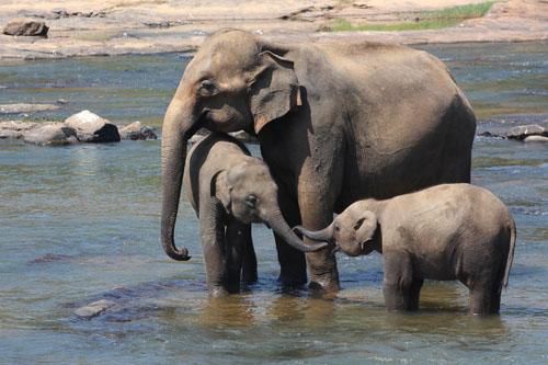 orfanotrofio-elefanti-3