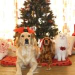 Animali domestici e Natale
