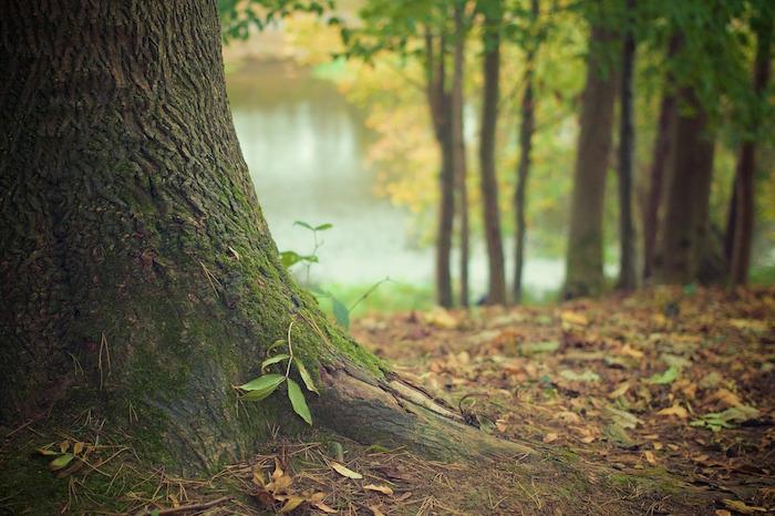 albero smart forest
