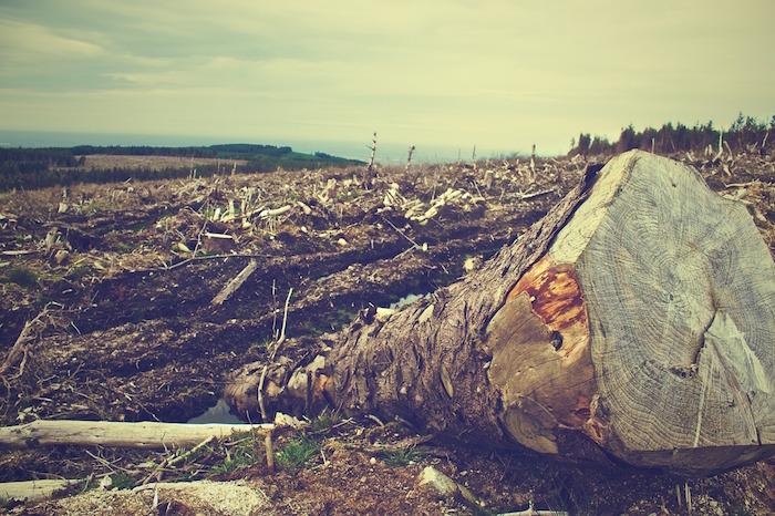 deforestazione smart forest