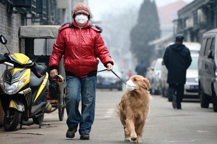 inquinamento salute animali
