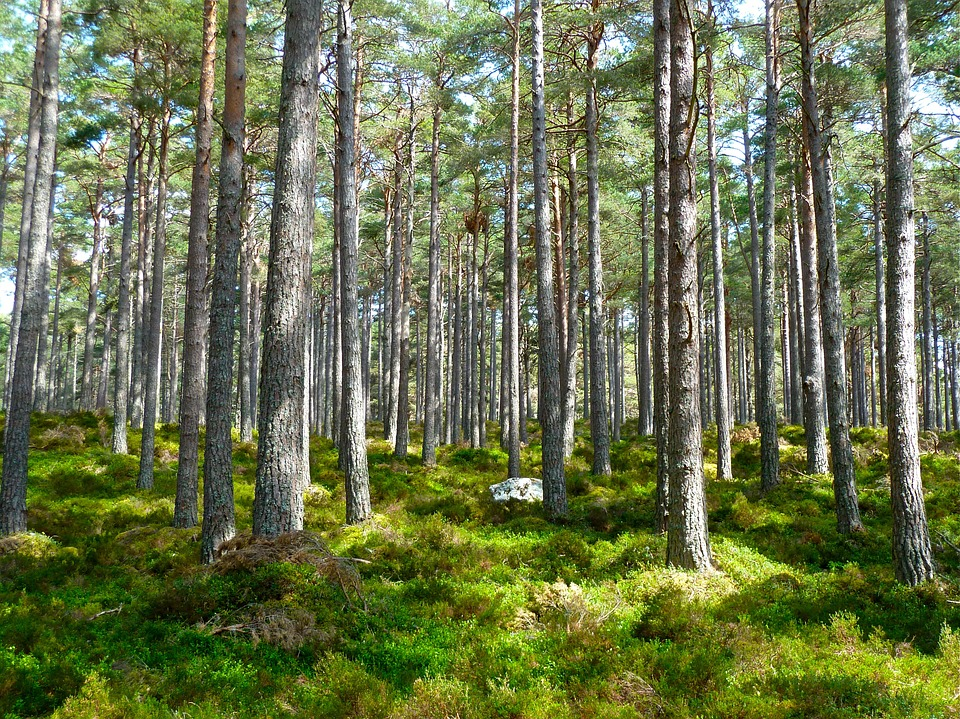 forest-272595_960_720