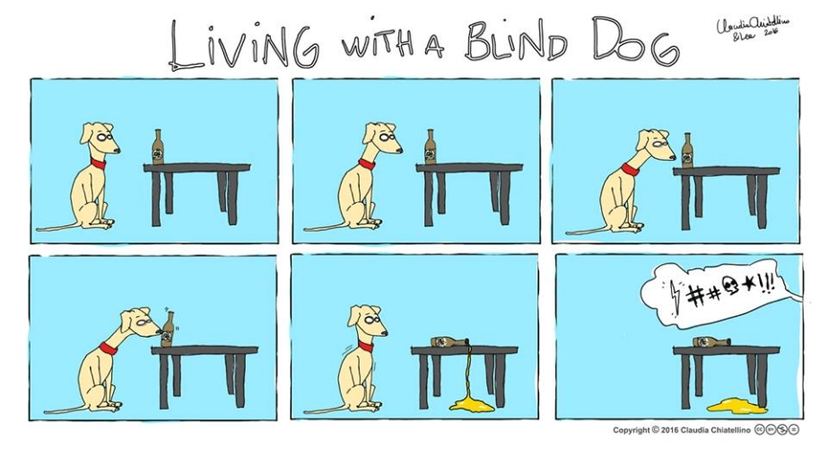 living-with-a-blind-dog-4-923x500.jpg