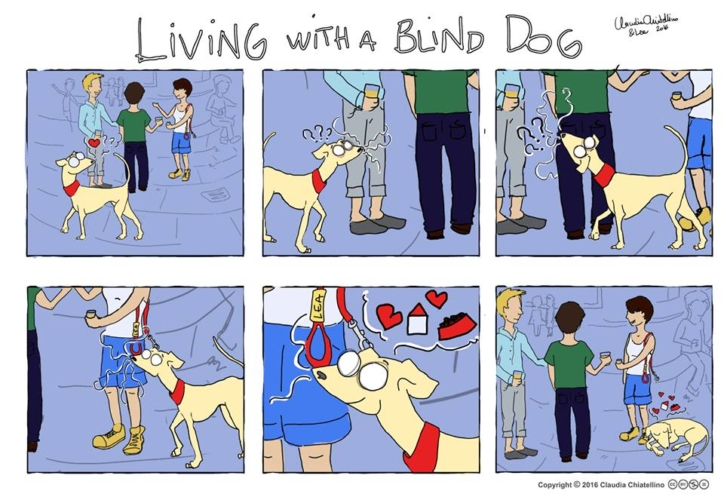 living-with-a-blind-dog-6-724x500.jpg