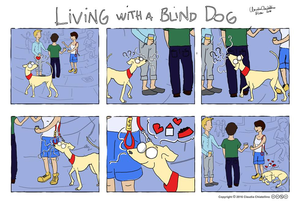 Living with a Blind Dog