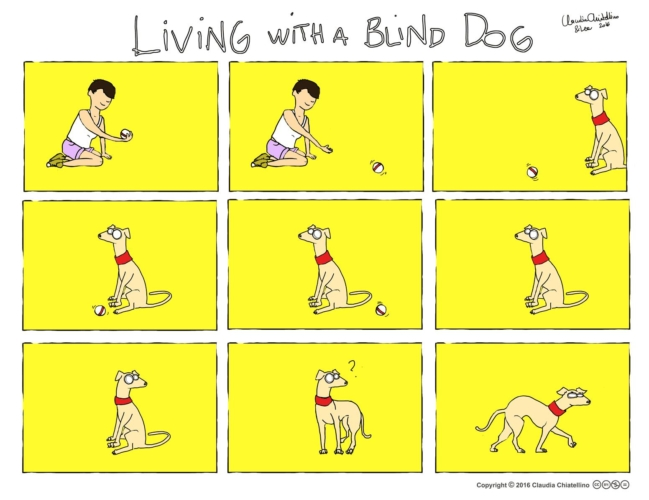 living-with-a-blind-dog-649x500.jpg