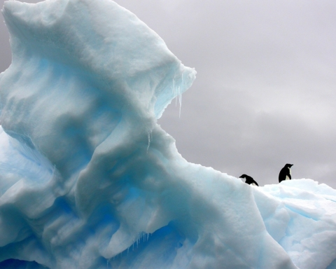 cambiamenti climatici  e rischio specie