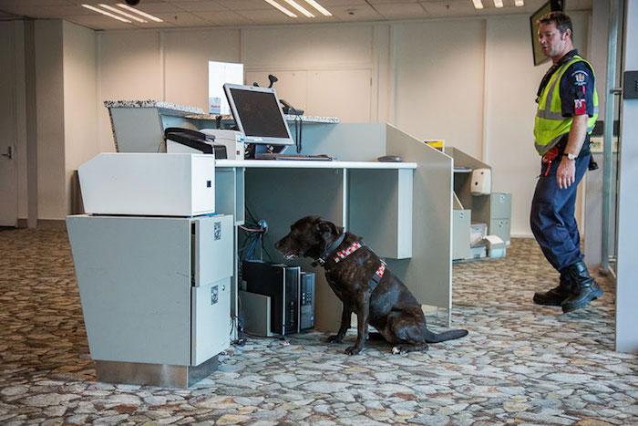 cani-lavoratori-andrew-fladeboe-cani biosicurezza