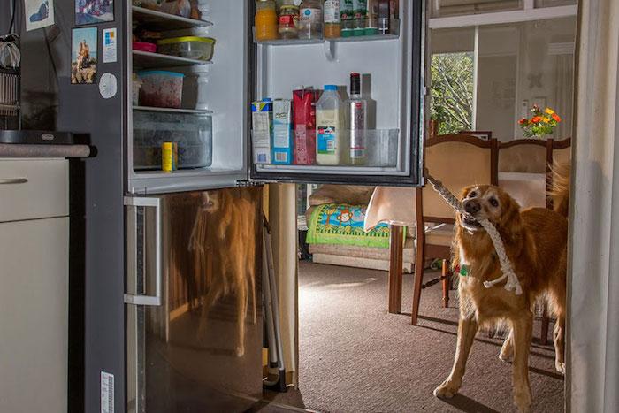 cani-lavoratori-andrew-fladeboe-cani portatori di handicap