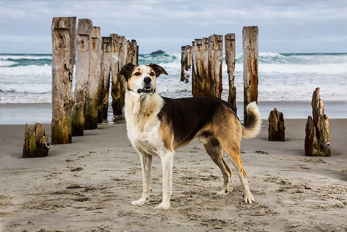 cani-lavoratori-andrew-fladeboe- cani salvataggio