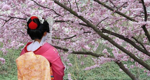 ciliegi-in-fiore-Giappone-dondakeit.jpg