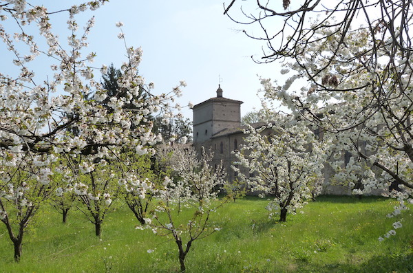 ciliegi-in-fiore-vignola.jpg