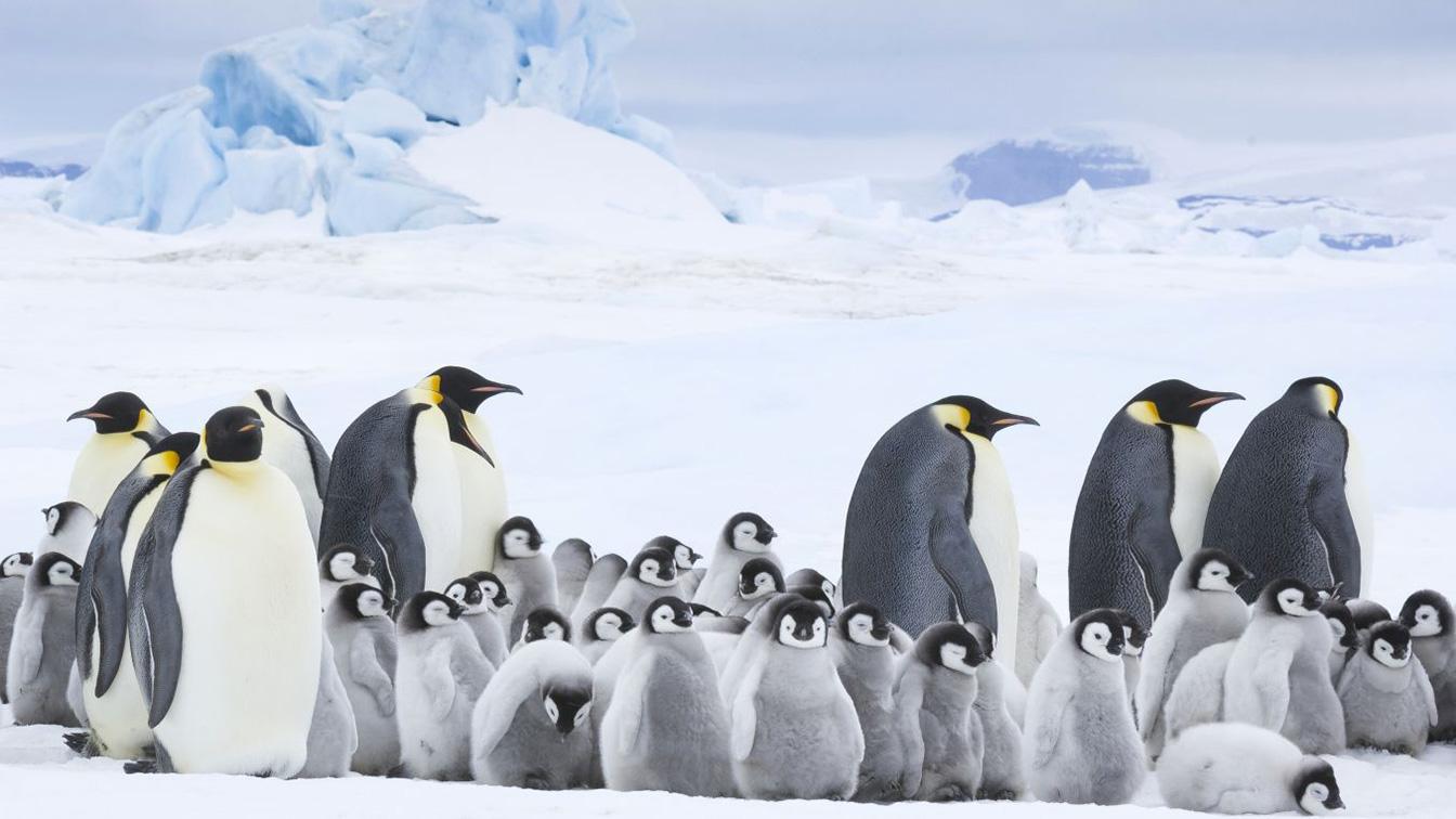 La marcia dei pinguini di Luc Jacquet